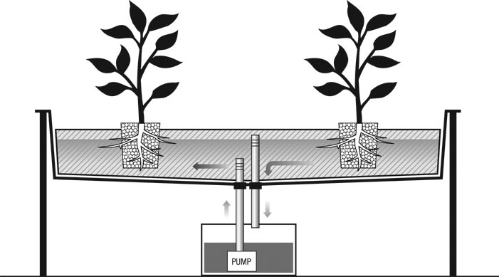 Hydroponic Flood and Drain System